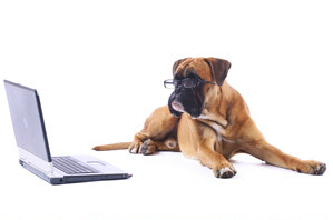 online dog trainer search